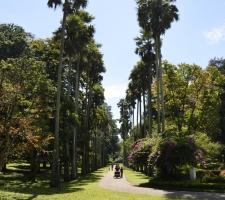 botanicka-zahrada-v-kandy