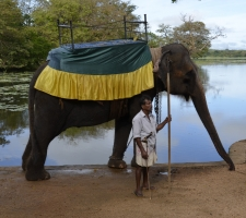 sloni-taxi
